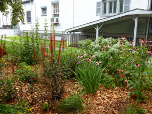 UC-DOE Rain Garden & Bioretention Areas